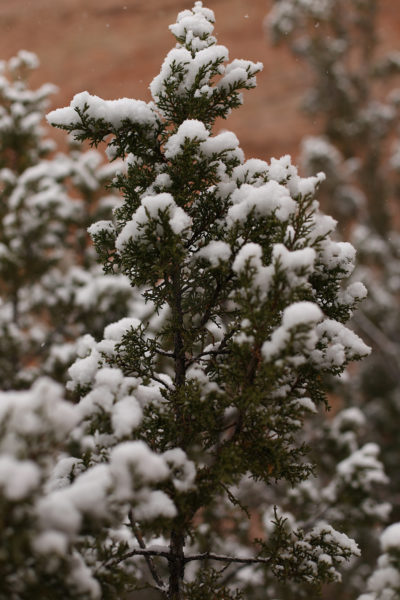 Navajo Nation President Begaye: Christmas is a Season of Giving and Celebrating K