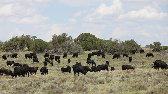 Farm Bill Reauthorization Empowers the Navajo Nation