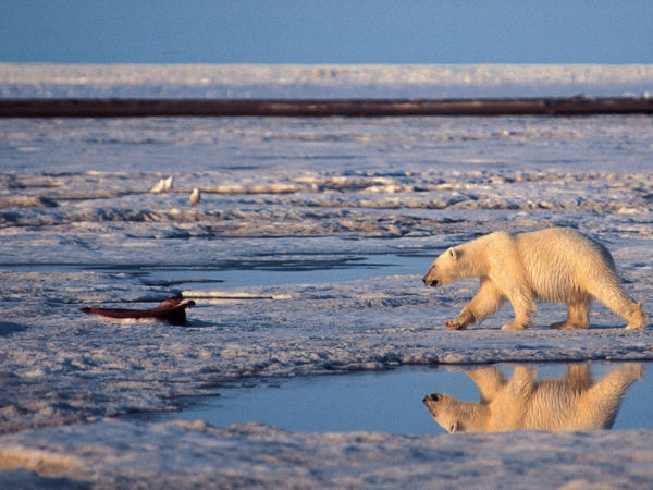 Gwich'in, Allies Oppose Arctic National Wildlife Refuge Oil Leasing at D.C. Public Hearing