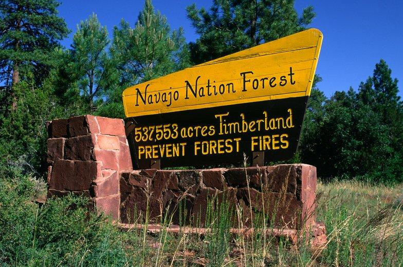Navajo Nation sues DOI, Secretary Bernhardt for Forestry Funds