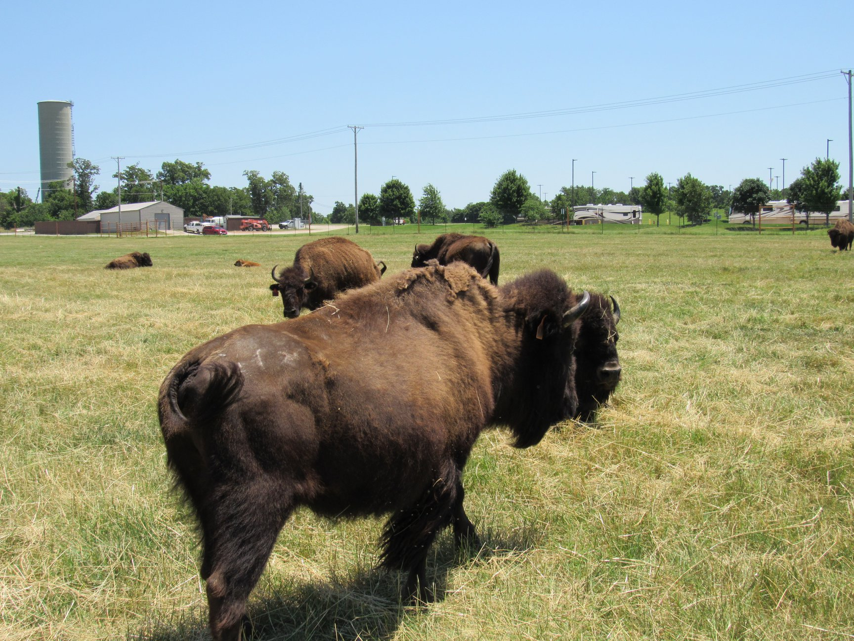 Interior and Partners Commit to Long-Term Initiative to Conserve the American Bison